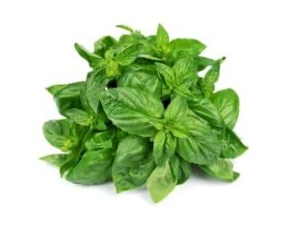Mint Leaves. Online grocery. Cheapest and the freshest vegetables. Next-day delivery within Klang Valley for RM5 only.