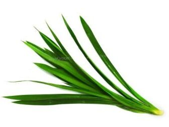 Pandan Leaves. Online grocery. Cheapest and the freshest vegetables. Next-day delivery within Klang Valley for RM5 only.